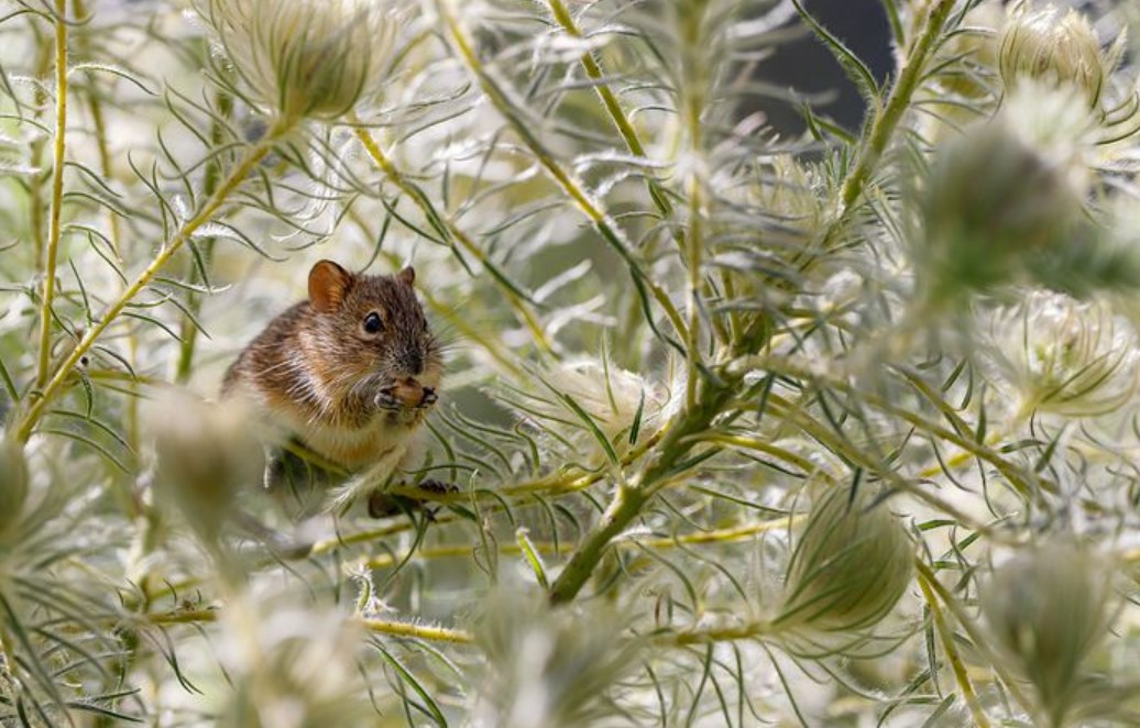 tips for pest control